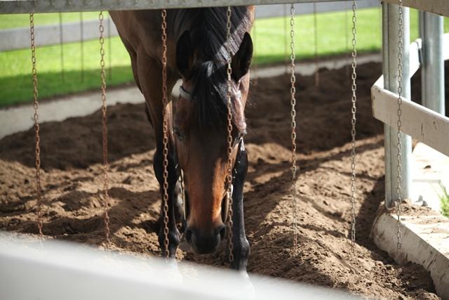 marcheur chevaux tarif