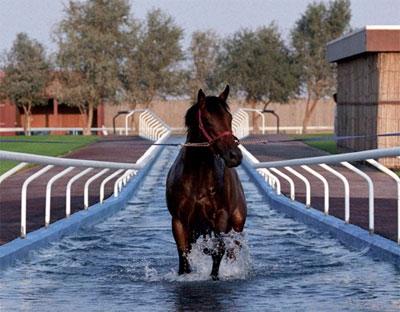 aventure fantastique cheval