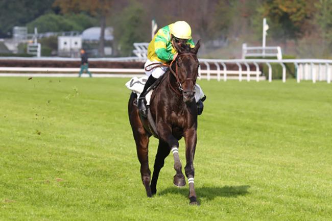 Ultraji gagne le Prix Carmarthen : un cheval qui sait faire le buzz -  France sire