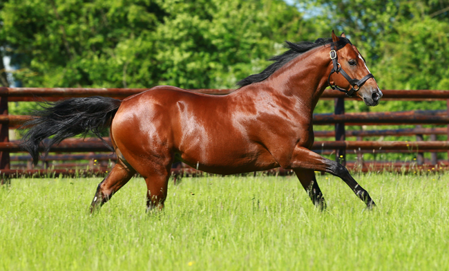 Olympic Glory : le signe des temps - France sire